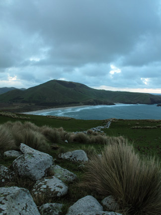 Above the Cove, Looking out to Alan's Beach on the Otago Peninsula