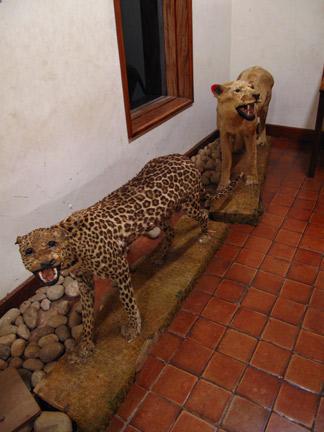 African Stuffed Animals