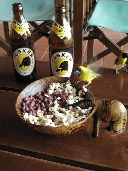 Birds like popcorn