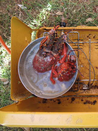 Boiling up Crayfish