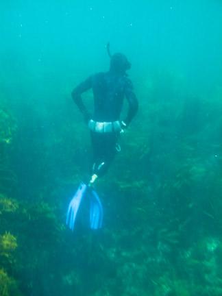 Frasier Diving