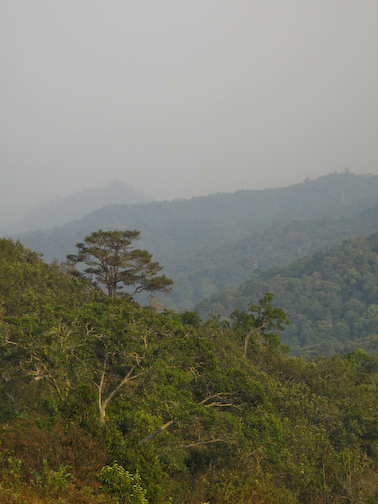 It was the dry season when I was in Thailand.  It hadn't rained quite a while, and with the farmers burning last seasons ground brush, the air was think with smoke and humidity.