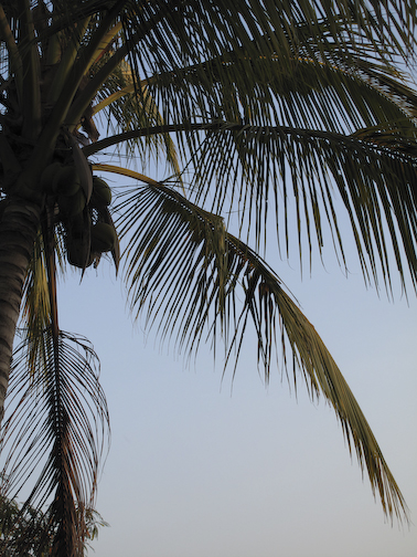 I like palm trees!