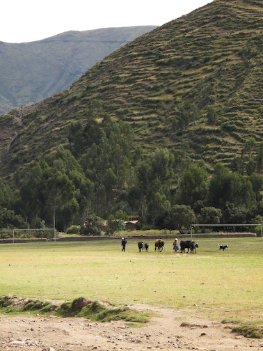 Got to love that even in a rural valley town there is a football pitch, even if its used as a pasture.  Welcome to South America.