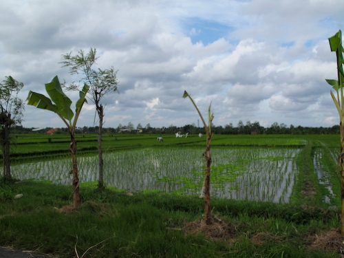 Balinese Country Side